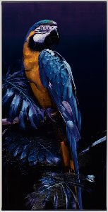 Parrot in blue