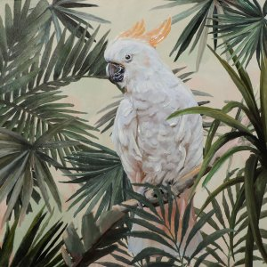 Lonely cockatoo