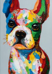 funny colorful dog