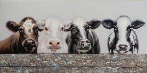 Les vaches derrière la clôture