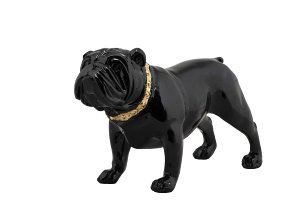 Bulldog with golden collar
