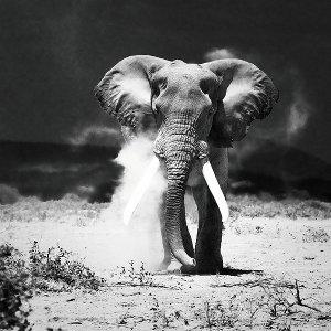 desert elephant in the dark