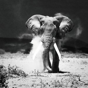 desert elephant in the dark