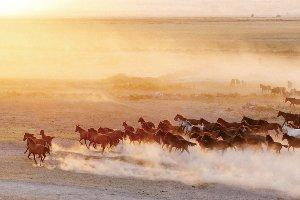 Wild horses I