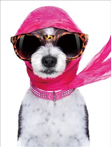 Female dog with pink scarf and sunglasses