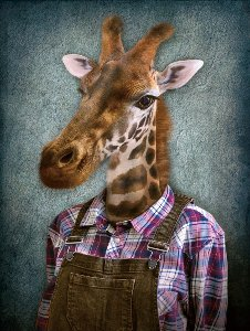 Giraffe with dungarees