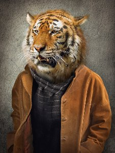 Tiger with a coat
