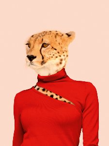 Cheetah in red sweater