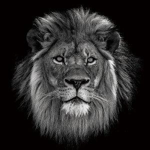Le Roi Lion en noir et blanc