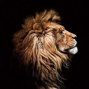 Profil du Roi Lion