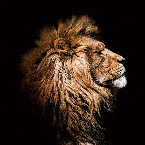 The Lion King in profile