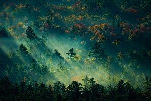 Forêt mystique au lever du soleil