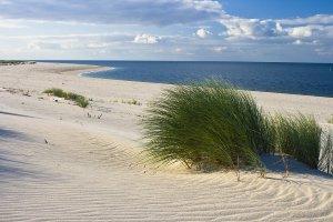 Beach with dune grass