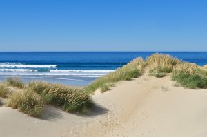Dunes by the sea 1