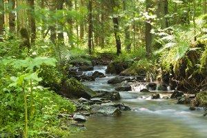 Flußlauf im Wald 1
