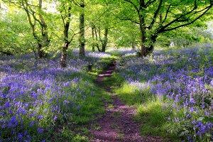 Wald mit Lavendel 1