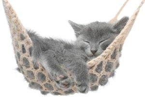 Kätzchen in der Hängmatte