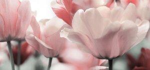 Blüten in rose