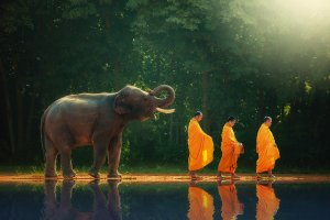 monks hiking with elephant