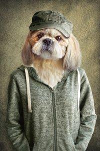lovely dog with jacket