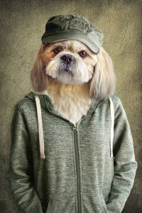 Witziger Hund mit Jacke