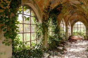 lost floor grow over with plants