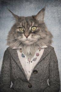 Katzenfrau