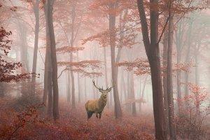 Hirsch im Herbstwald