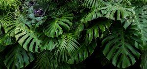 Grünes Blättermeer