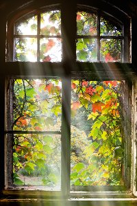 Window with leaves