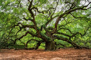 Verzweigter Baum