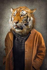 Tigre en manteau