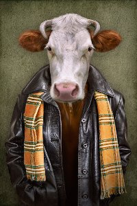 Vache en blouson de cuir