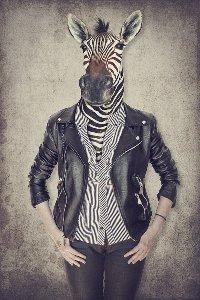 Zebra Gentleman