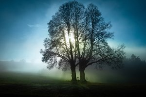 Arbres dans la brume matinale