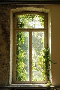 Fenster bewachsen mit Laub